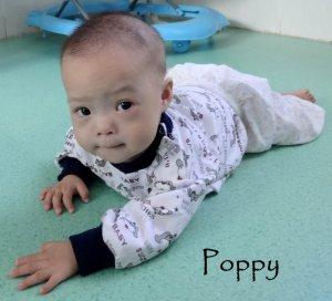Poppy b