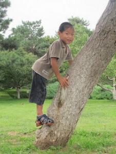 PD2: Jory is climbing on a tree & is near the bottom, wearing a tan shirt and gray shorts.